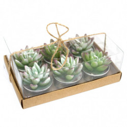 Set of 6 Agave Cactus...
